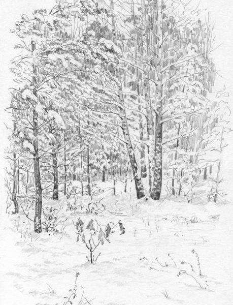 mm_62_Зимний лес 1